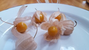 Cape gooseberries grown in Abbey Gardens